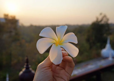 Retreat-Flower